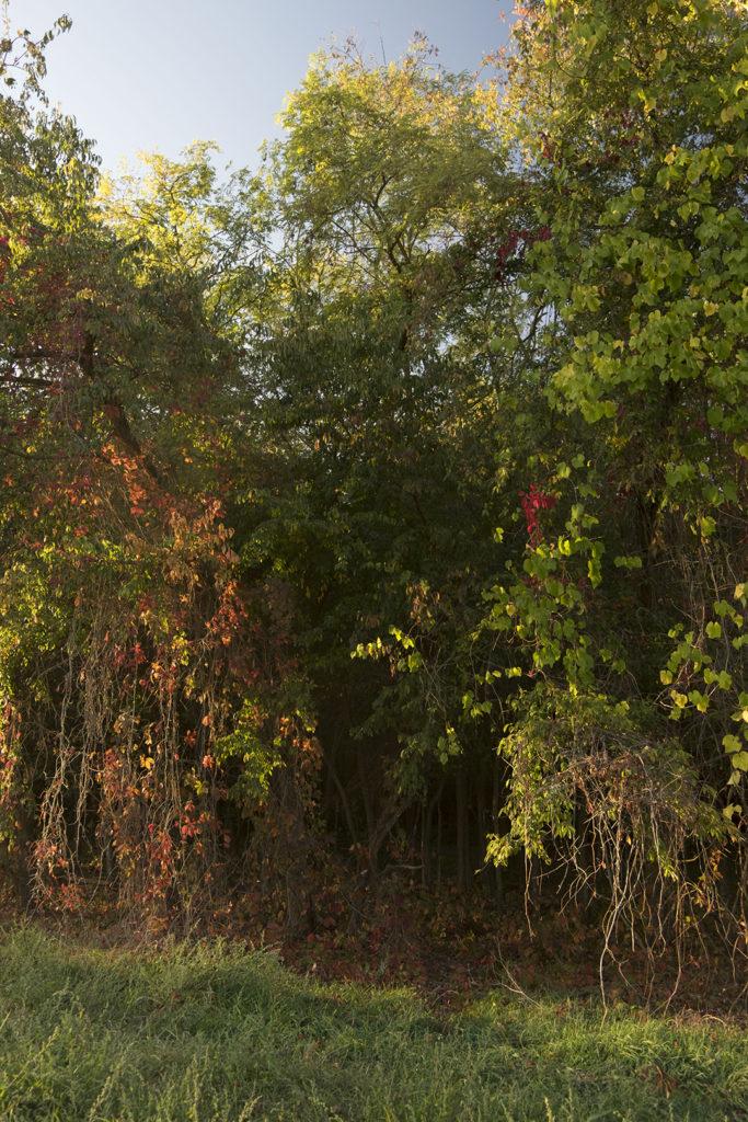 Lo scatto con il bilanciamento sulla quinta casella, per valorizzare il colore delle foglie autunnali.